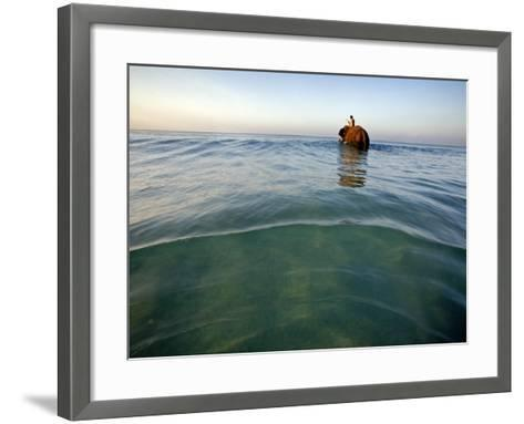 Elephant 'Rajes' Wading into Sea with His Mahout on Back-Johnny Haglund-Framed Art Print