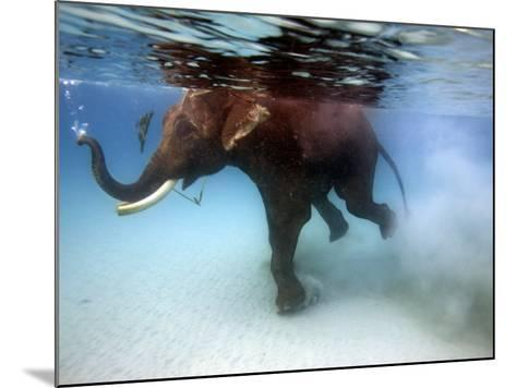 Elephant 'Rajes' Taking Swim in Sea-Johnny Haglund-Mounted Photographic Print