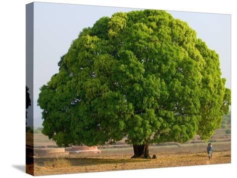 A Big Tree-Keren Su-Stretched Canvas Print