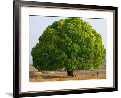 A Big Tree-Keren Su-Framed Art Print