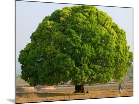 A Big Tree-Keren Su-Mounted Photographic Print