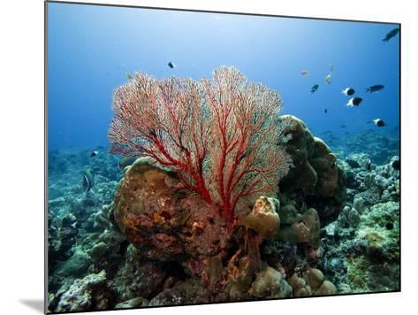 Underwater Reef-Johnny Haglund-Mounted Photographic Print