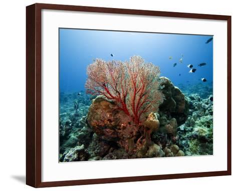 Underwater Reef-Johnny Haglund-Framed Art Print