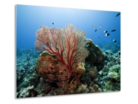 Underwater Reef-Johnny Haglund-Metal Print