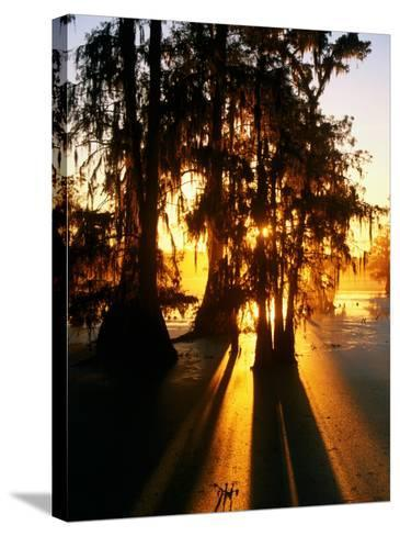 Bald Cypress Trees Silhouetted at Sunset at Lake Martin-John Elk III-Stretched Canvas Print