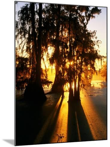Bald Cypress Trees Silhouetted at Sunset at Lake Martin-John Elk III-Mounted Photographic Print