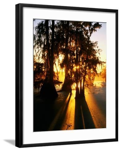 Bald Cypress Trees Silhouetted at Sunset at Lake Martin-John Elk III-Framed Art Print