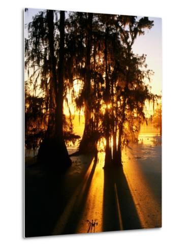Bald Cypress Trees Silhouetted at Sunset at Lake Martin-John Elk III-Metal Print
