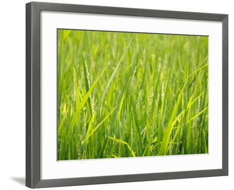 Rice Field, Near Can Tho, Mekong Delta-Kimberley Coole-Framed Art Print