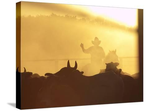 Man on Horse Working Cattle in Yards, Bullo River Station, Near Kununurra-Michael Gebicki-Stretched Canvas Print