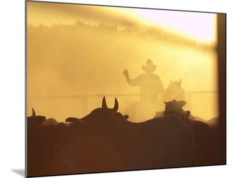 Man on Horse Working Cattle in Yards, Bullo River Station, Near Kununurra-Michael Gebicki-Mounted Photographic Print