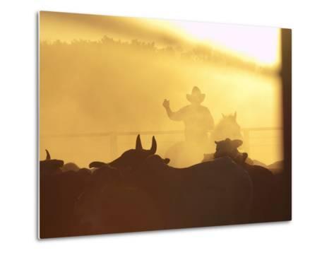 Man on Horse Working Cattle in Yards, Bullo River Station, Near Kununurra-Michael Gebicki-Metal Print