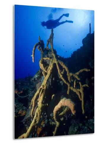 Diver Silhouette over Reef with Large Stand of Scattered Pore Rope Sponge-Michael Lawrence-Metal Print