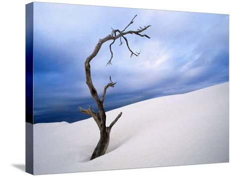 Dead Tree in Delisser Sandhills-Mitch Reardon-Stretched Canvas Print