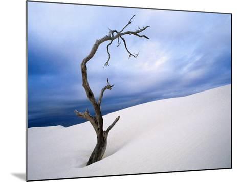 Dead Tree in Delisser Sandhills-Mitch Reardon-Mounted Photographic Print