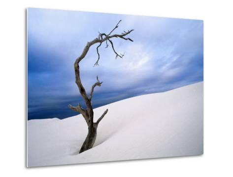 Dead Tree in Delisser Sandhills-Mitch Reardon-Metal Print