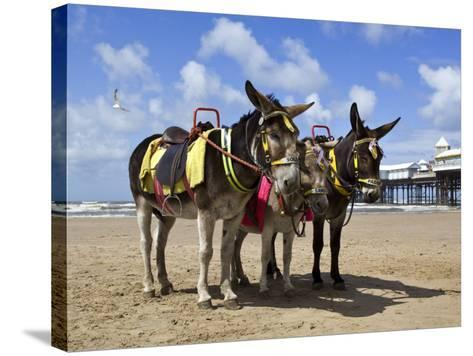 Donkey Rides on Blackpool Beach-Neil Setchfield-Stretched Canvas Print