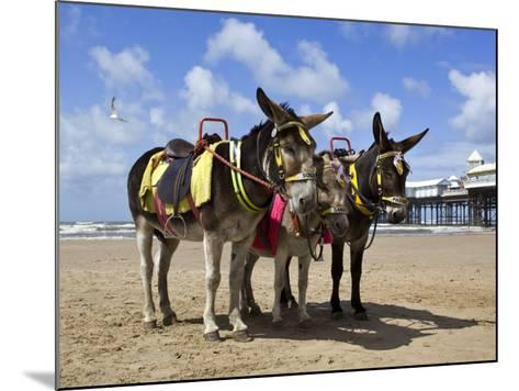 Donkey Rides on Blackpool Beach-Neil Setchfield-Mounted Photographic Print