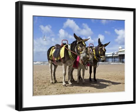 Donkey Rides on Blackpool Beach-Neil Setchfield-Framed Art Print