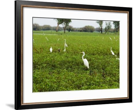 Yellow Waters Billabong with Water Birds Including Herons and Egrets-Paul Dymond-Framed Art Print
