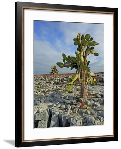 Giant Prickly Pear Cactus (Opuntia Spp.)-Manfred Gottschalk-Framed Art Print