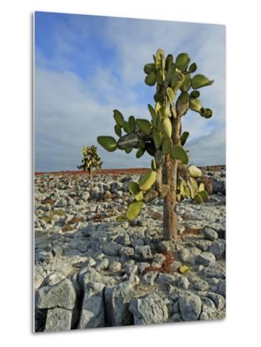 Giant Prickly Pear Cactus (Opuntia Spp.)-Manfred Gottschalk-Metal Print