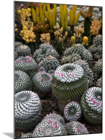 Cactus Garden in the Pine View Nursery-Antony Giblin-Mounted Photographic Print