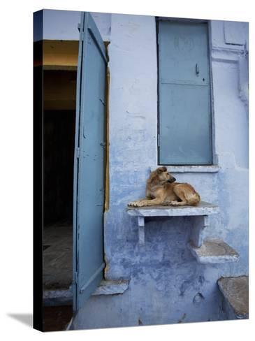 Dog Resting on Step Leading to Doorway-April Maciborka-Stretched Canvas Print
