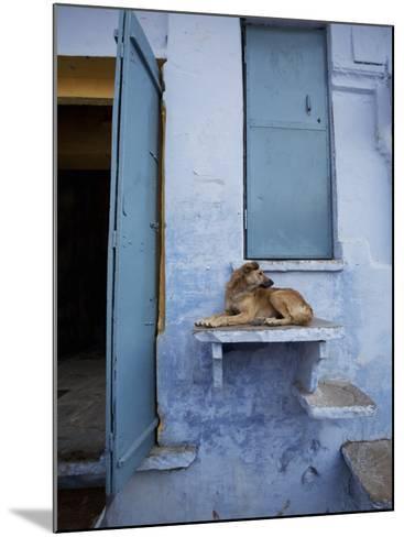 Dog Resting on Step Leading to Doorway-April Maciborka-Mounted Photographic Print