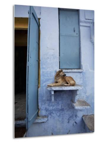 Dog Resting on Step Leading to Doorway-April Maciborka-Metal Print