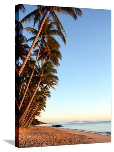 Dawn on Ellis Beach, Near Palm Cove-Andrew Bain-Stretched Canvas Print