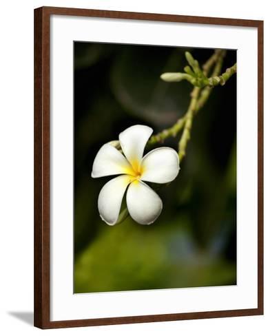 Frangipani Flower Detail-April Maciborka-Framed Art Print