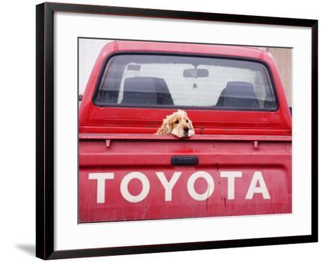 Dog Waiting on Back of Ute-Andrew Bain-Framed Art Print