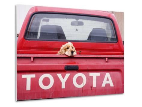Dog Waiting on Back of Ute-Andrew Bain-Metal Print