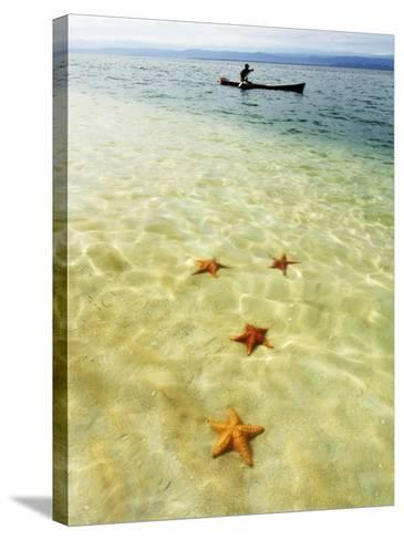 Sea Stars in Tropical Water at Star Beach-Alfredo Maiquez-Stretched Canvas Print