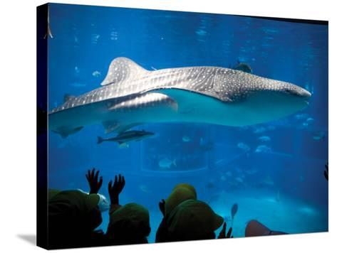 Excited School Children Gazing at Whale Shark at Osaka Aquarium-Antony Giblin-Stretched Canvas Print