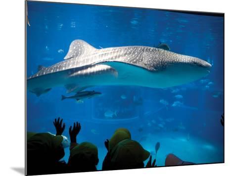 Excited School Children Gazing at Whale Shark at Osaka Aquarium-Antony Giblin-Mounted Photographic Print