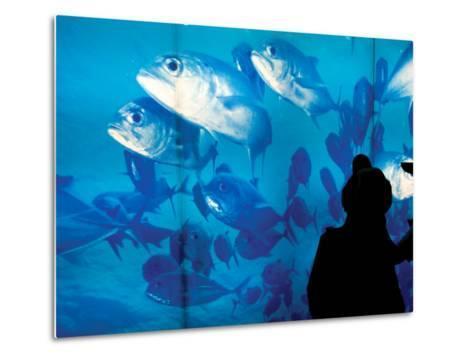 Excited School Children Gazing at Fish at Osaka Aquarium-Antony Giblin-Metal Print