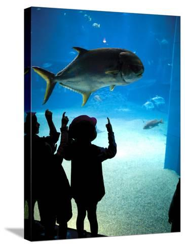 Excited School Children Gazing at Fish at Osaka Aquarium-Antony Giblin-Stretched Canvas Print