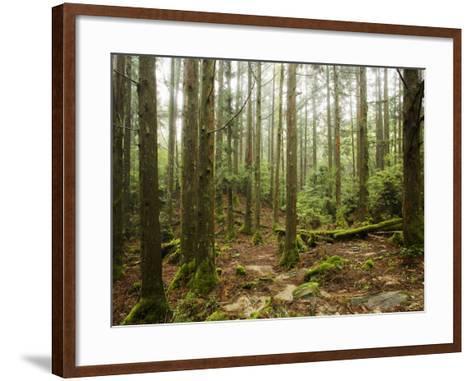 Forest Along Arakawa Trail to Jomon Sugui (Giant Tree)-Shayne Hill-Framed Art Print