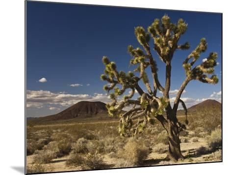 Joshua Tree in Cinder Cone Lava Beds Area from Aikens Mine Road in Mojave National Preserve-Witold Skrypczak-Mounted Photographic Print