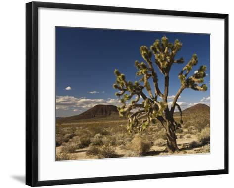 Joshua Tree in Cinder Cone Lava Beds Area from Aikens Mine Road in Mojave National Preserve-Witold Skrypczak-Framed Art Print