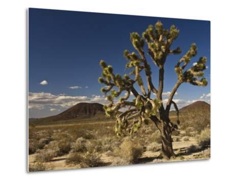 Joshua Tree in Cinder Cone Lava Beds Area from Aikens Mine Road in Mojave National Preserve-Witold Skrypczak-Metal Print