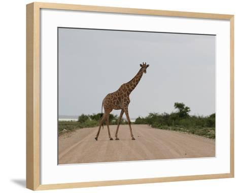 Giraffe Crossing the Road-Uros Ravbar-Framed Art Print