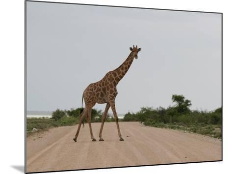 Giraffe Crossing the Road-Uros Ravbar-Mounted Photographic Print