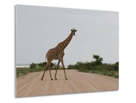 Giraffe Crossing the Road-Uros Ravbar-Metal Print