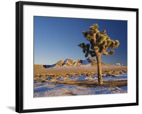 Joshua Trees at Darwin Plateau Covered with Snow after Winter Storm-Witold Skrypczak-Framed Art Print