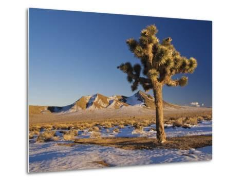 Joshua Trees at Darwin Plateau Covered with Snow after Winter Storm-Witold Skrypczak-Metal Print