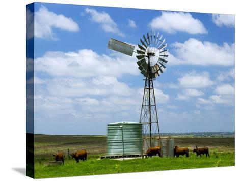 Watering Cattle Beneath Windmill on Darling Downs, Southern Queensland-Philip Game-Stretched Canvas Print