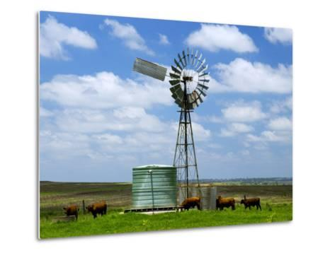 Watering Cattle Beneath Windmill on Darling Downs, Southern Queensland-Philip Game-Metal Print